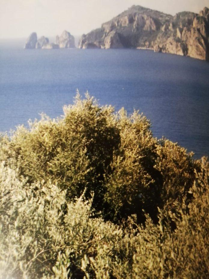 Livia Iaccarino Punta Campanella e i Faraglioni di Capri